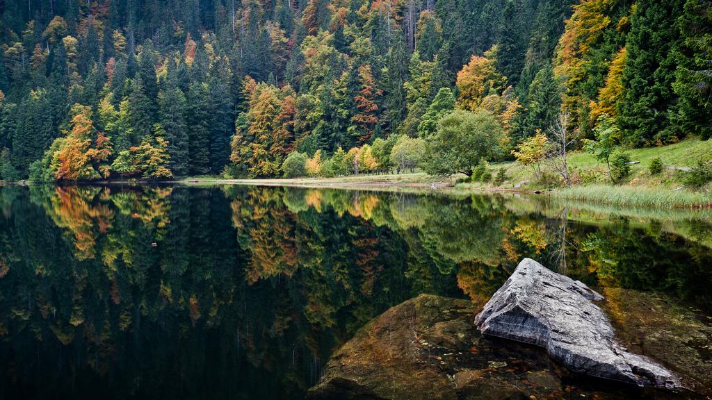 Hutan Terbesar di Eropa