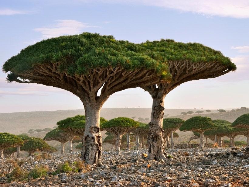 Hutan Terindah Di Dunia