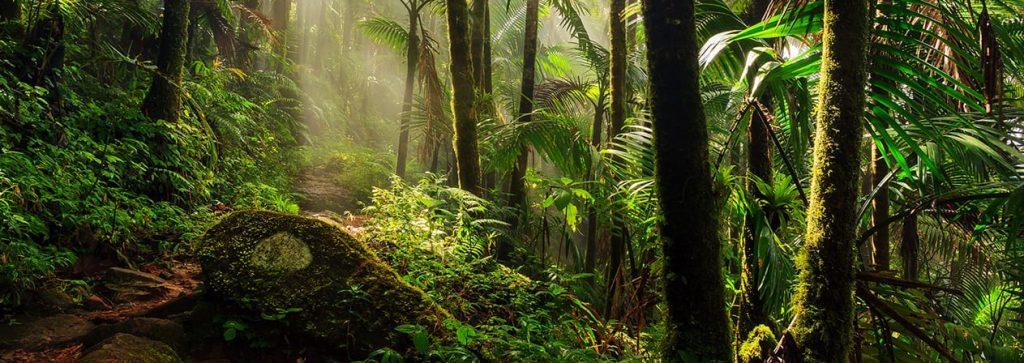 Manfaat Rainforest1