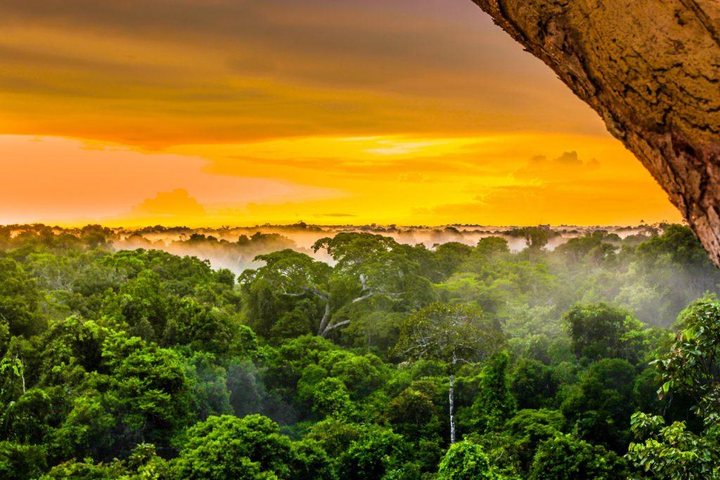 Manfaat Rainforest