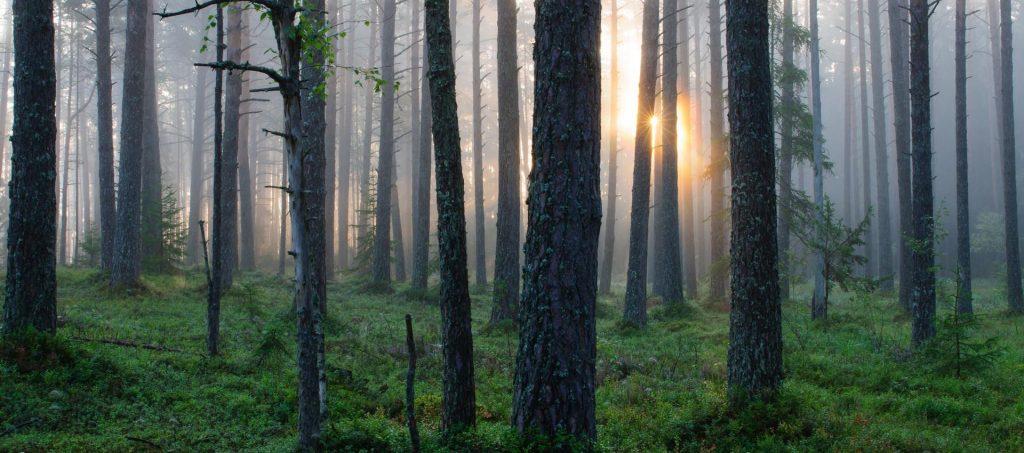 Berbagai Jenis Hutan