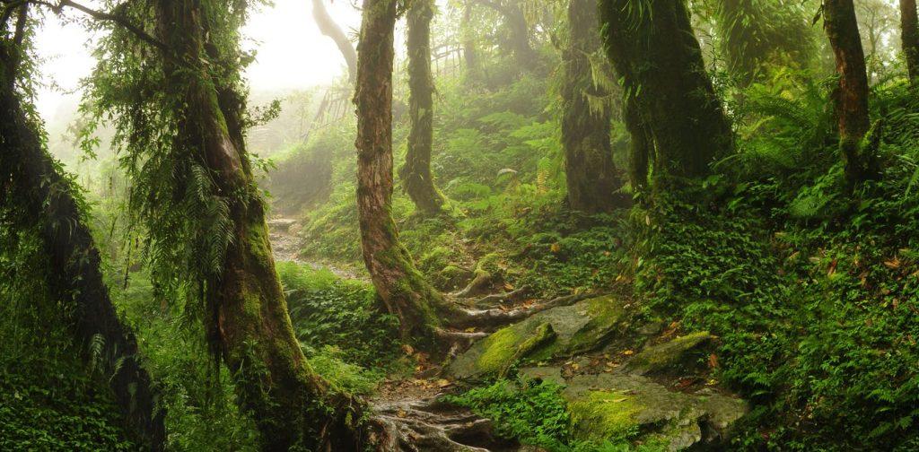 Berbagai Jenis Hutan1