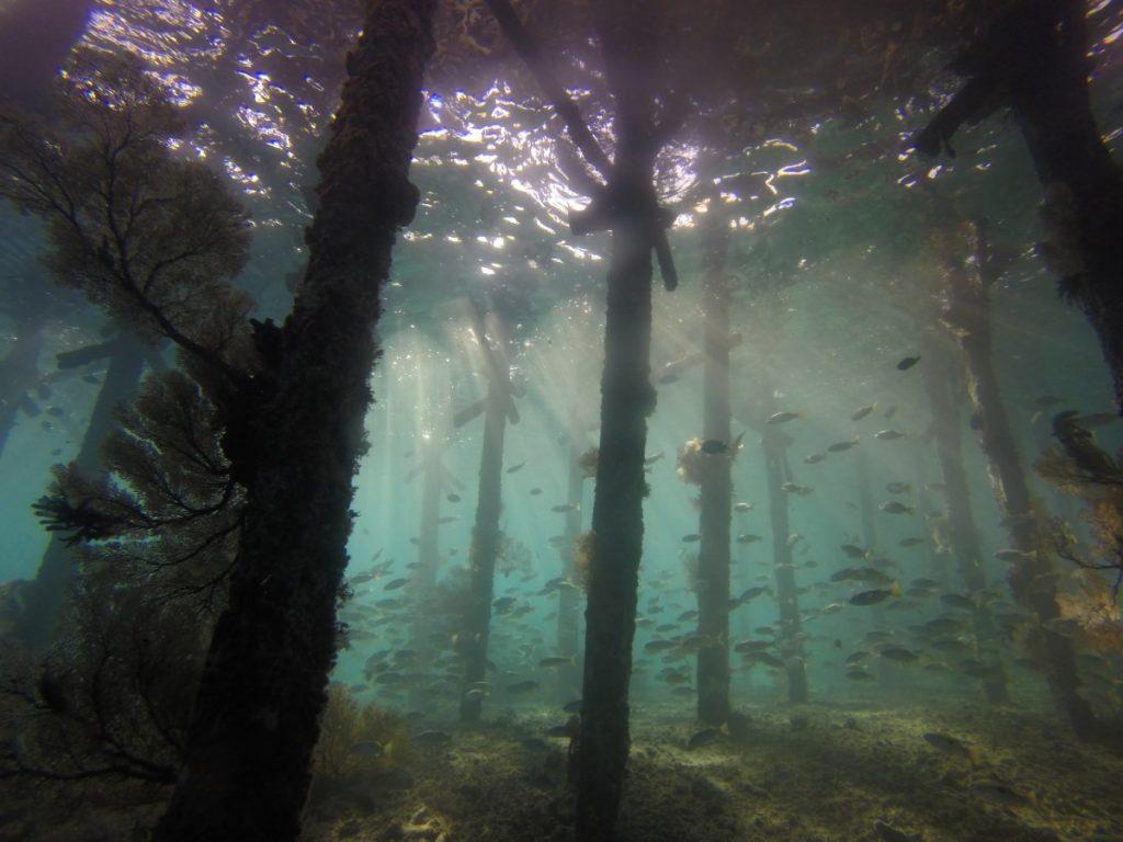 Hutan bawah laut Alabama
