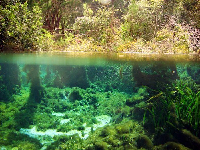 Hutan bawah laut Alabama1