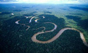 Fakta Tersembunyi Dari Hutan Amazon
