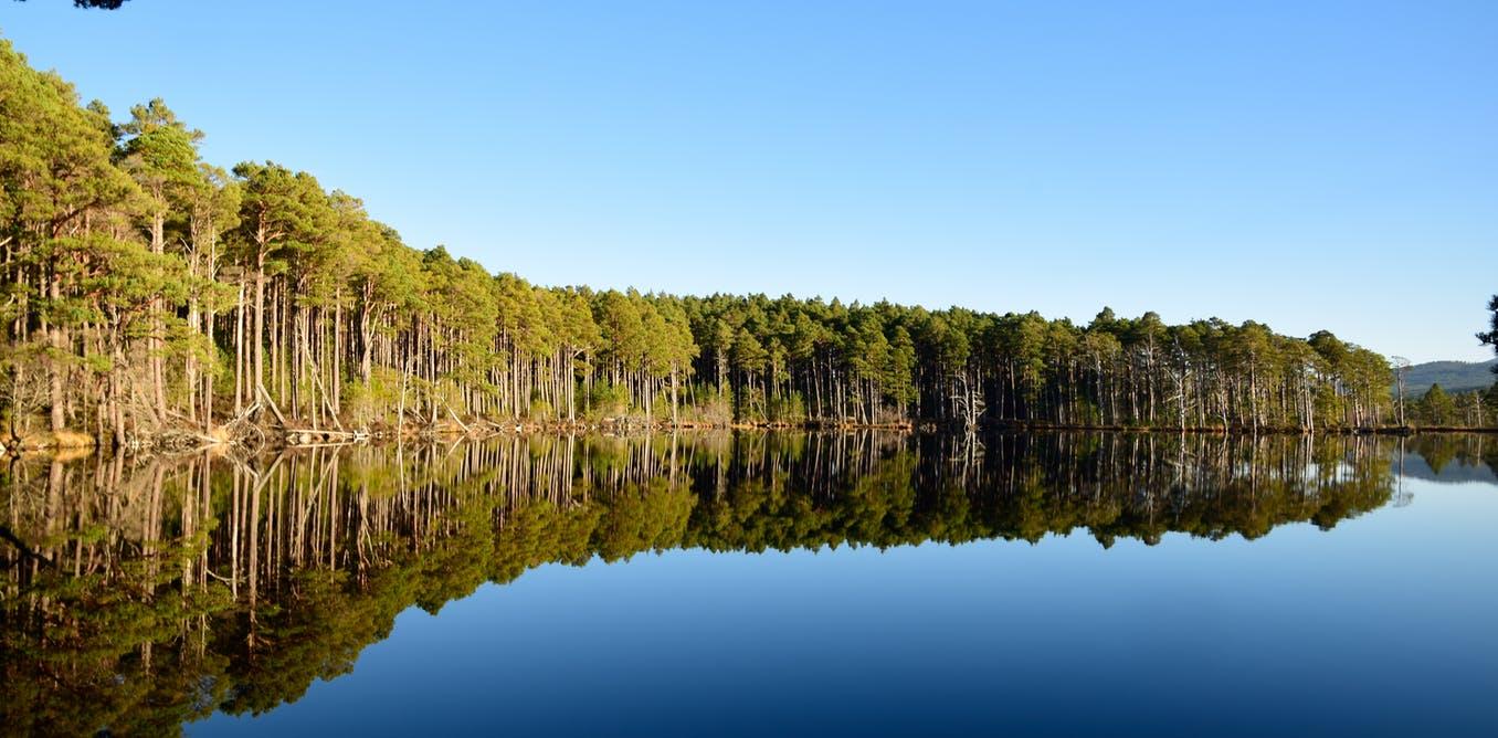 """Hutan Mengalami Pertumbuhan """"Overdrive"""" Untuk Pulih Dari Kekeringan"""